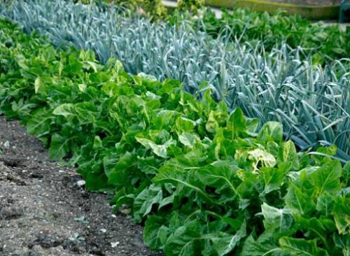 Обереги для огорода и урожая