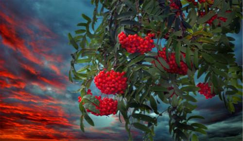 Рождество Пресвятой Богородицы.Ритуалы и заговоры