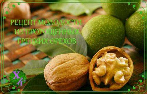 Неоценимая польза пророщенных грецких орехов